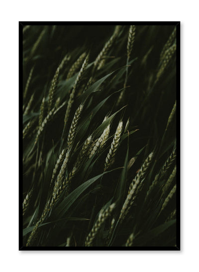 Minimalist design poster by Opposite Wall with Young Wheat botanical photography