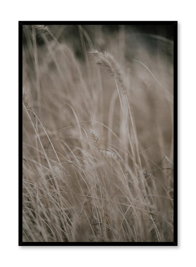 Minimalist design poster by Opposite Wall with Wild Grasses botanical photography