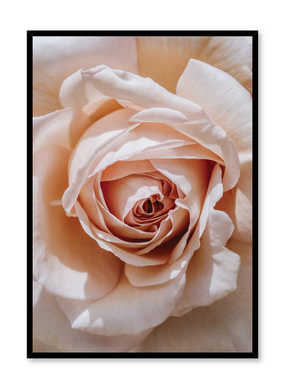 Minimalist design poster by Opposite Wall with Single Pink Rose floral photography