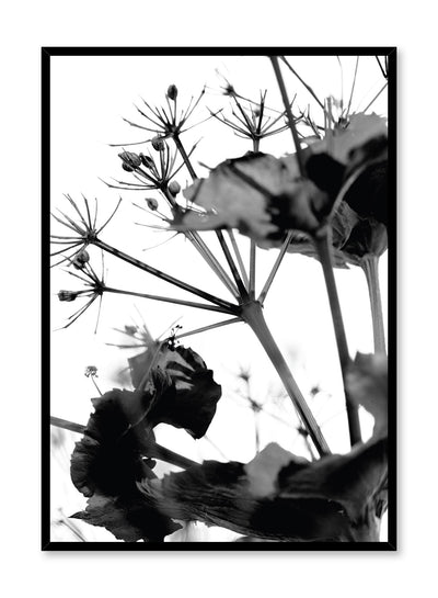 Minimalist design poster by Opposite Wall with black and white nature photography of dried flowers