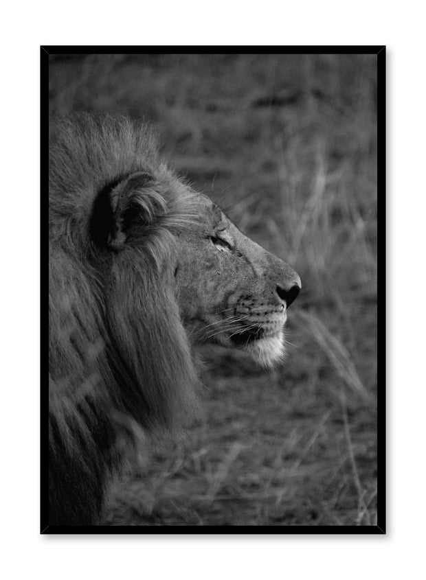 Minimalist design poster by Opposite Wall with black and white animal photography of Lion