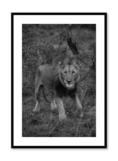 Minimalist design poster by Opposite Wall with black and white animal photography of Lion in the wilderness