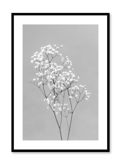 Minimalistic wall photography by Opposite Wall with Baby's Breath flower in black and white