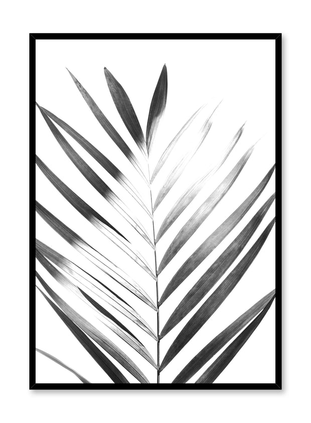 Modern minimalist poster by Opposite Wall with Sunlight palm leaf photo art in black and white