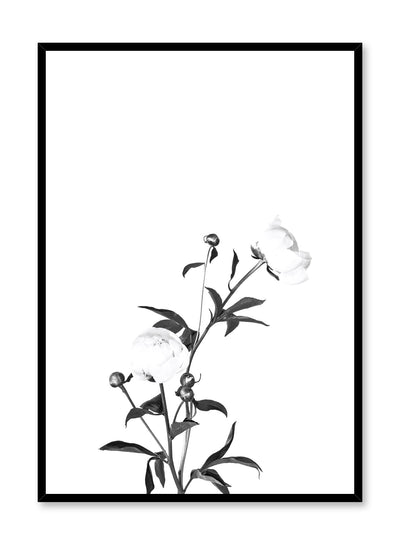 Scandinavian poster by Opposite Wall with trendy art photo of peonies - Romance in black and white