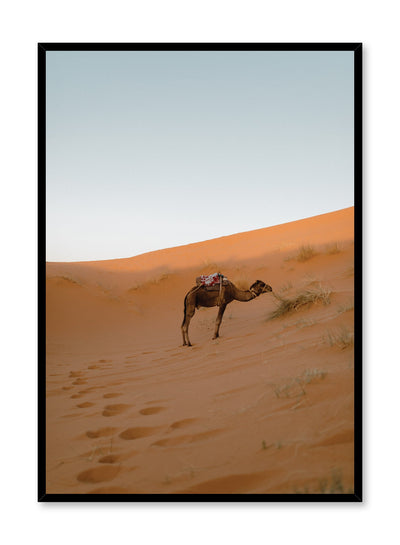 Modern minimalist landscape photography poster by Opposite Wall with picture of lone camel in Sahara Desert
