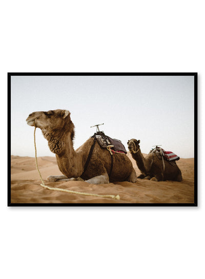 Modern nature photography poster by Opposite Wall with camels in the desert.