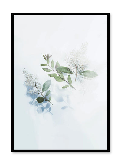 Modern minimalist floral photography poster by Opposite Wall with hazy white flowers on white background