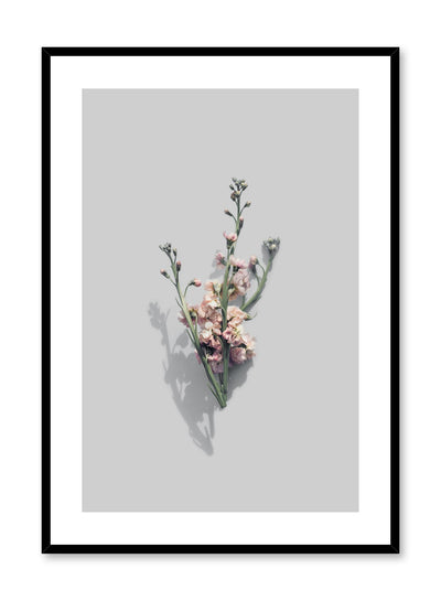 Modern minimalist photography photo by Opposite Wall with Vintage Blooms pink flowers