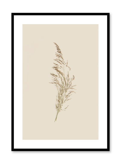 Modern minimalist botanical photography poster by Opposite Wall with single grass stem