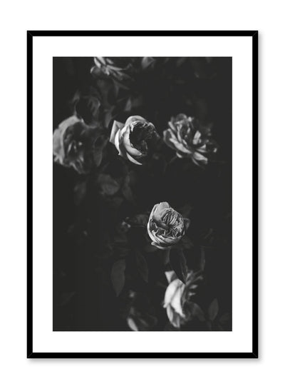 """Black & Rose Movie"" is a black & white floral photography poster by Opposite Wall of a vintage dramatic rose bush."