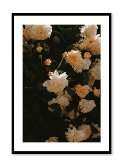 """Sun-Kissed Flowers"" is a flower photography poster by Opposite Wall of sunlit peach coloured peonies."