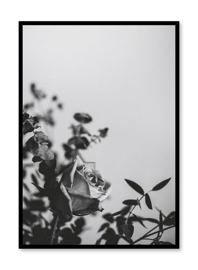 """Romantic Rose"" is a flower photography poster by Opposite Wall of a black & white rose flower bouquet."