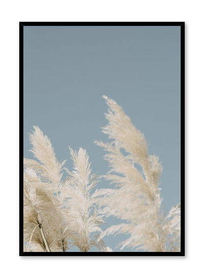 """Luminous Meadow"" is a botanical photography poster by Opposite Wall of airy blonde pampas grasses swaying under a sunny clear blue sky."