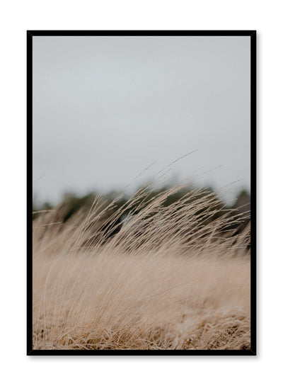 """Autumn Breeze"" is a botanical photography poster by Opposite Wall of fine and delicate beige grasses swaying in the wind during the fall season."