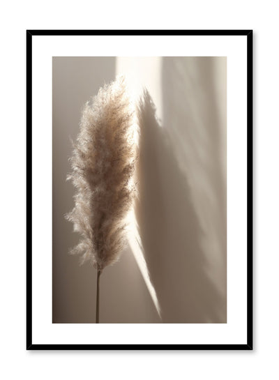 """Sunlit Pampas"" is a botanical photography poster by Opposite Wall of a single fluffy sunlit beige pampas over a beige wall."