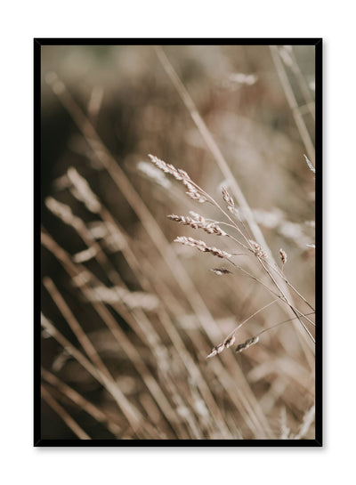 """Golden Grasses"" is a botanical photography poster by Opposite Wall of golden tall grasses swaying in the prairie."