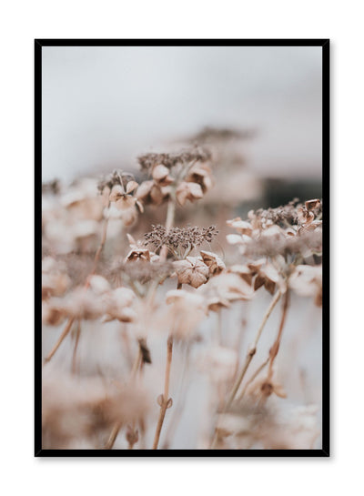 """Autumn Bloom"" is a botanical photography poster by Opposite Wall of close-up brown autumn flowers."