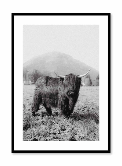 'Highland Cow' is a black & white animal photography poster by Opposite Wall of a friendly looking Highland cow standing in front of a beautiful mountain landscape in Ireland.