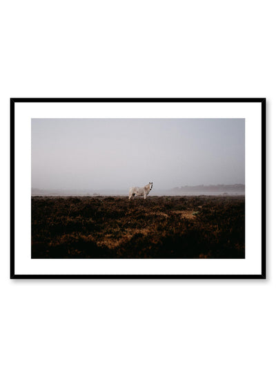 'Wild Horse' is an animal and landscape photography poster by Opposite Wall of a wild white horse standing in a vast and foggy field with distant mountains.