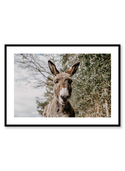 'Friendly Donkey' is an animal photography poster by Opposite Wall of an adorable grey donkey over a green tree background in the countryside.