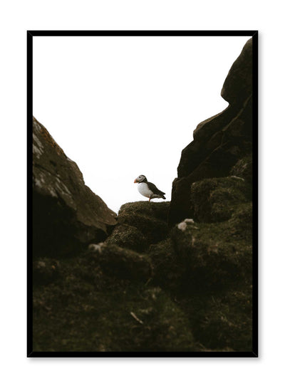 'Puffin Portrait' is an animal and landscape photography poster by Opposite Wall of a puffin bird standing atop rocky boulders.