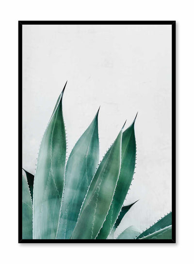 Prickly Leaves is a minimalist photography poster of a prickly green succulent by Opposite Wall.