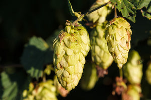IPA - India Pale Ales: Everything You Need To Know