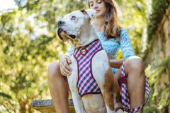 Zeedog Gummy mesh harness from Bali the Dog. Coolest dog gear from BalitheDog, for all dogs and dog lovers.