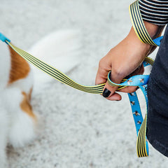 Bali the Dog ZeeDog Buzz Dog Leash, cool colourful pattern in blue and yellow, just love the insect details. Perfect for your dog!