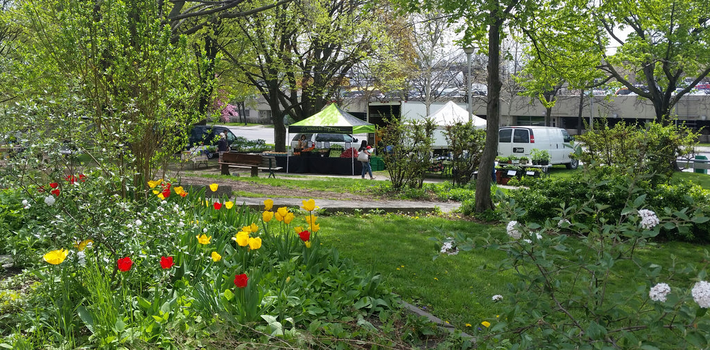 Dufferin Grove Farmer's Market Supporting Organic Farmer's Since 2002
