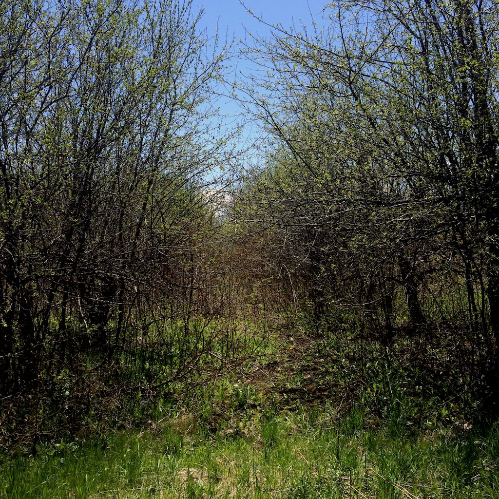 Lost orchard project update. Can we really save an orchard?
