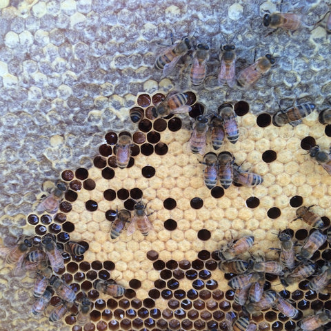 Windswept Pollinators Beehive Inspection Summer 2016