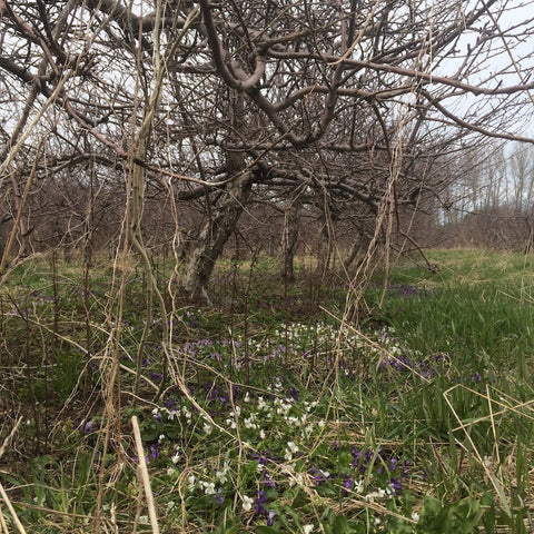 Biodiverse Habitat Windswept Lost Orchard Cider Project Site