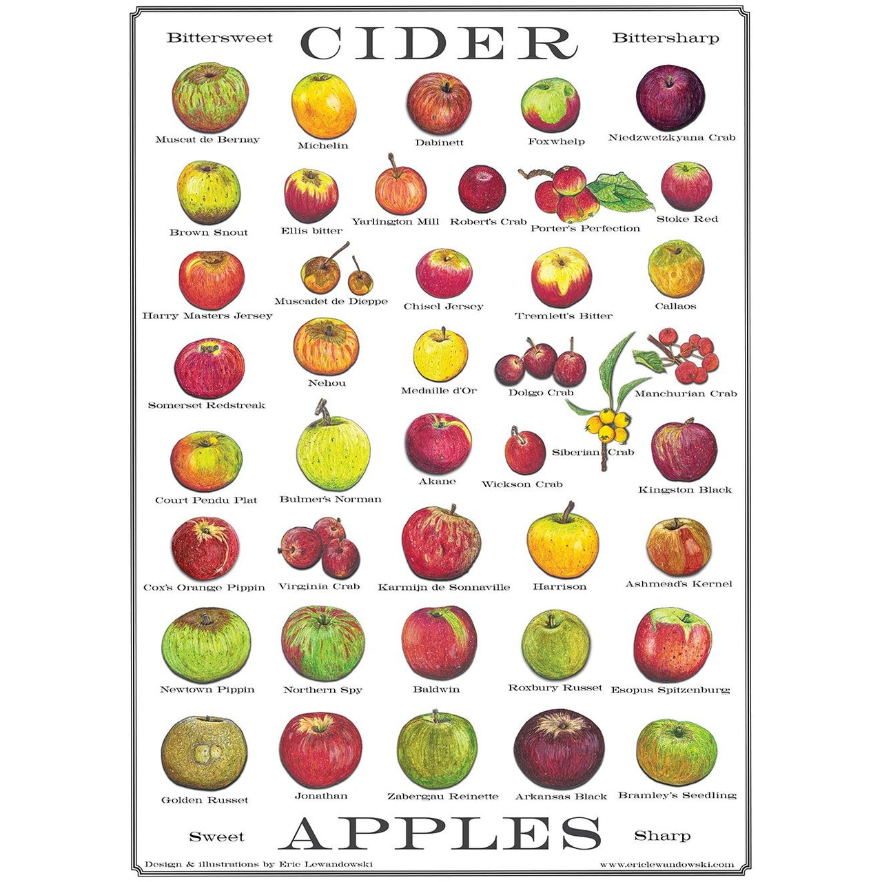 Cider Apple Postcard