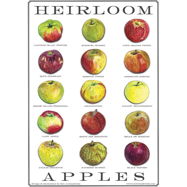 Heirloom Apple Postcard