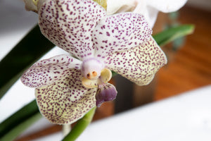 How to Grow Orchids ?