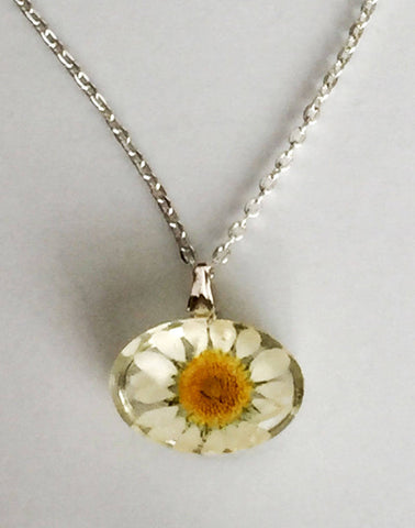 Botanical Real Daisy Pendant Necklace - Oval