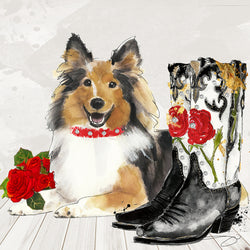 On the Range Collie - Studio One by Jodi Pedri