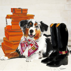 Ride in Style border collie - Studio One by Jodi Pedri