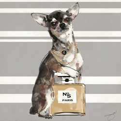 Date Night Chihuahua - Studio One by Jodi Pedri