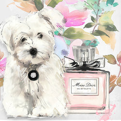 Lady Dior Maltese - Studio One by Jodi Pedri