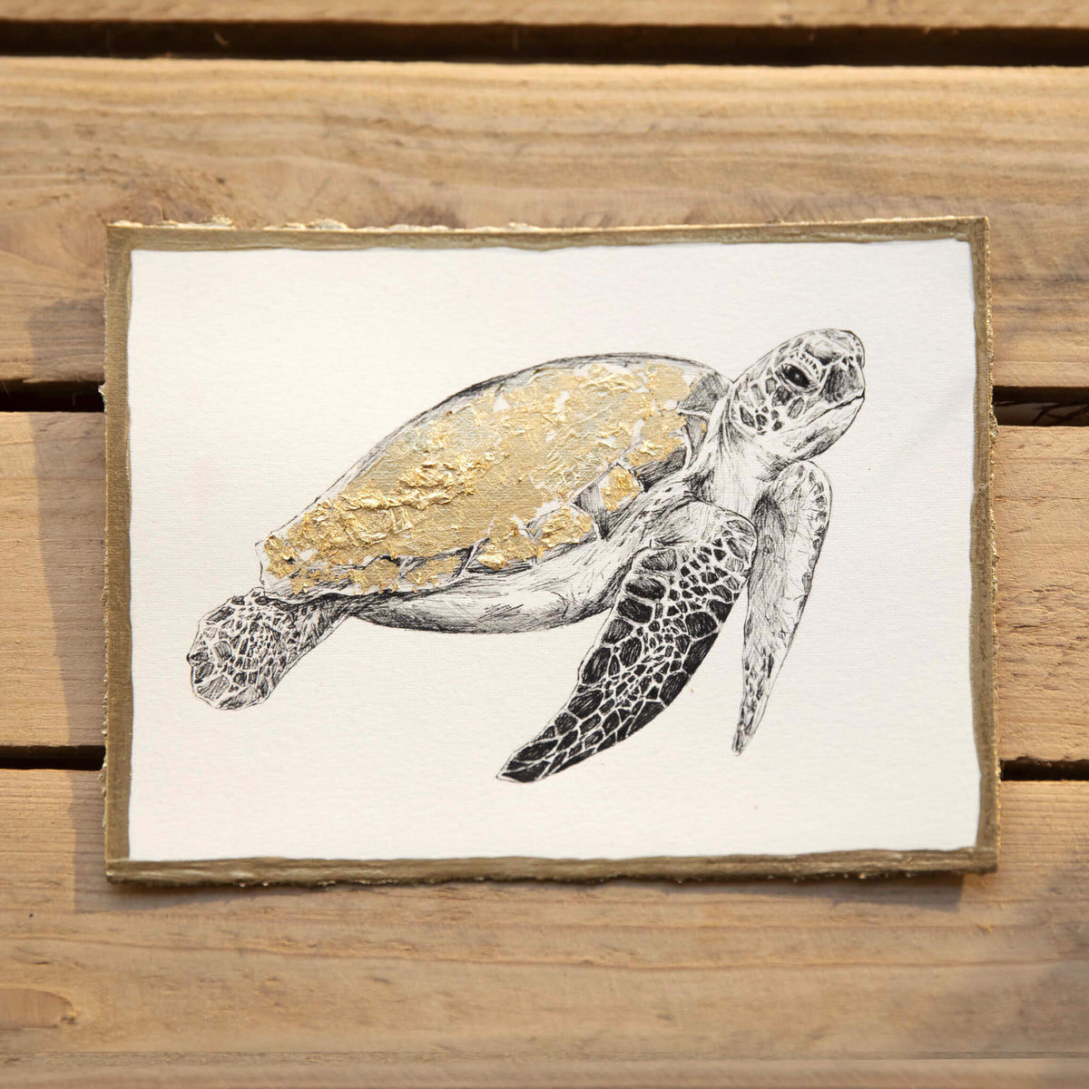 turtle-artwork-by-jackson-and-young