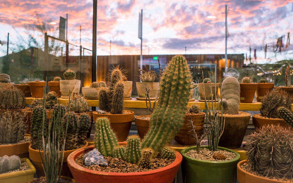 dirt shop Tucson Arizona potted cactus sunset msa annex