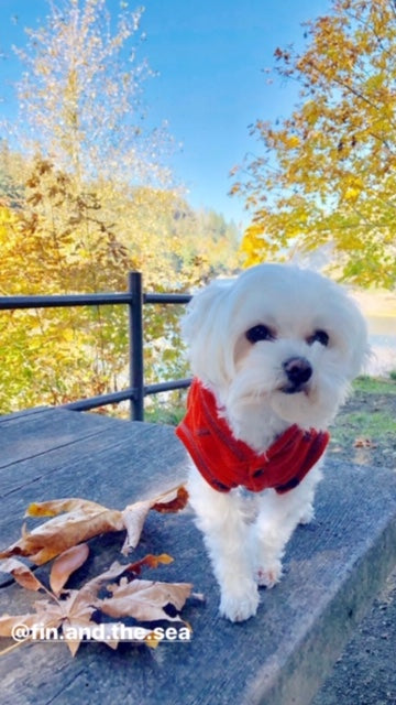 10 Fall Safety Tips For Dog Owners