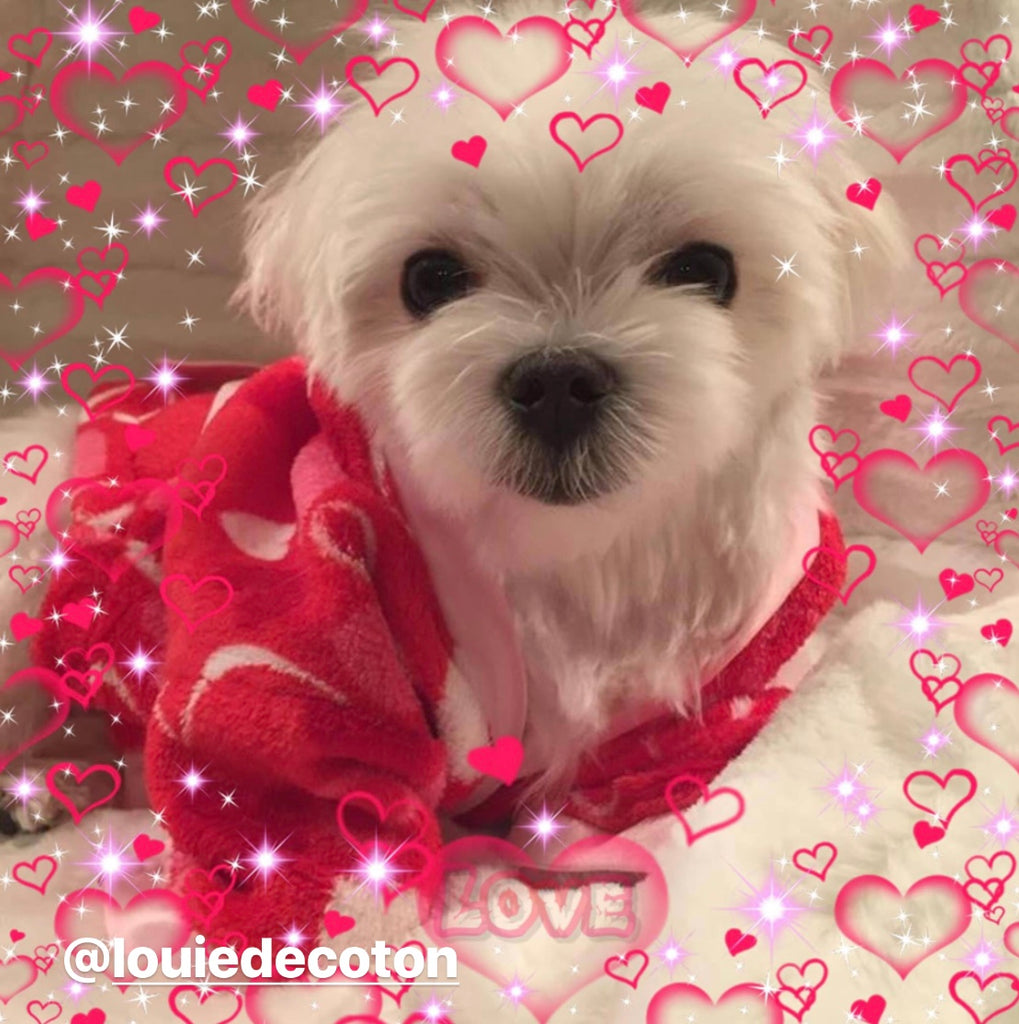 7 Ways to Have the Best Valentine's Day with Your Pet
