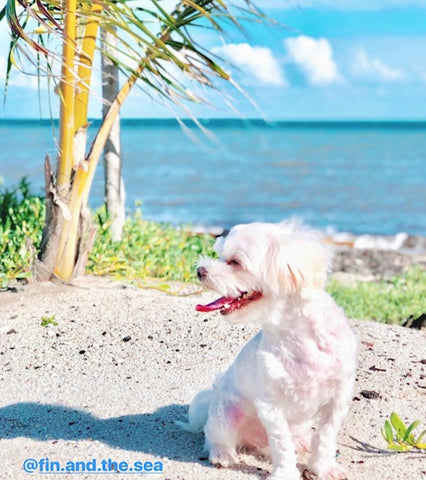 The Safest Sunscreen for Dogs - Louie de Coton