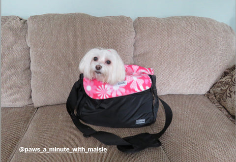 Louie de Coton Back to School Anxiety for Dogs