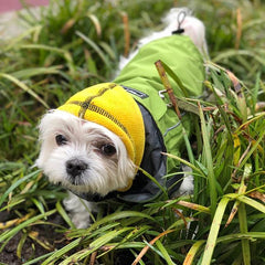 pacific northwest rain jacket small dog clothing and yellow fleece