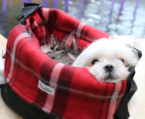 small dog in our carrier with plaid liner